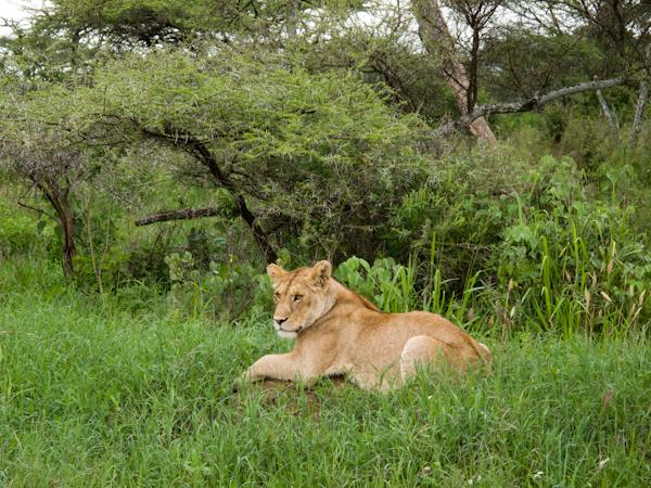 serengeti-5295
