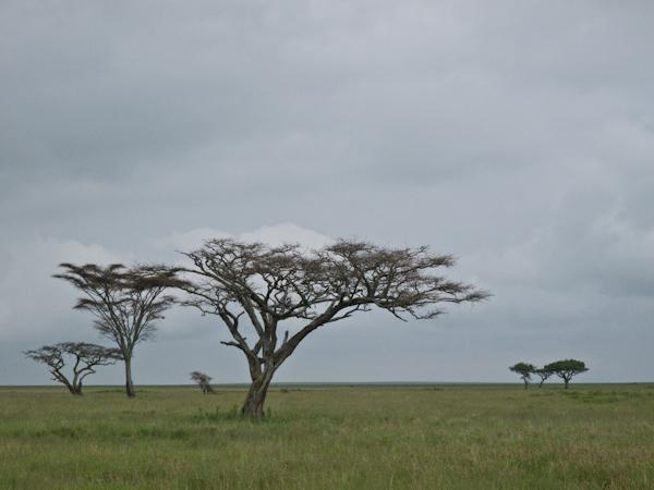 serengeti-5326