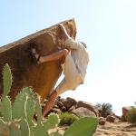 avoiding cactus